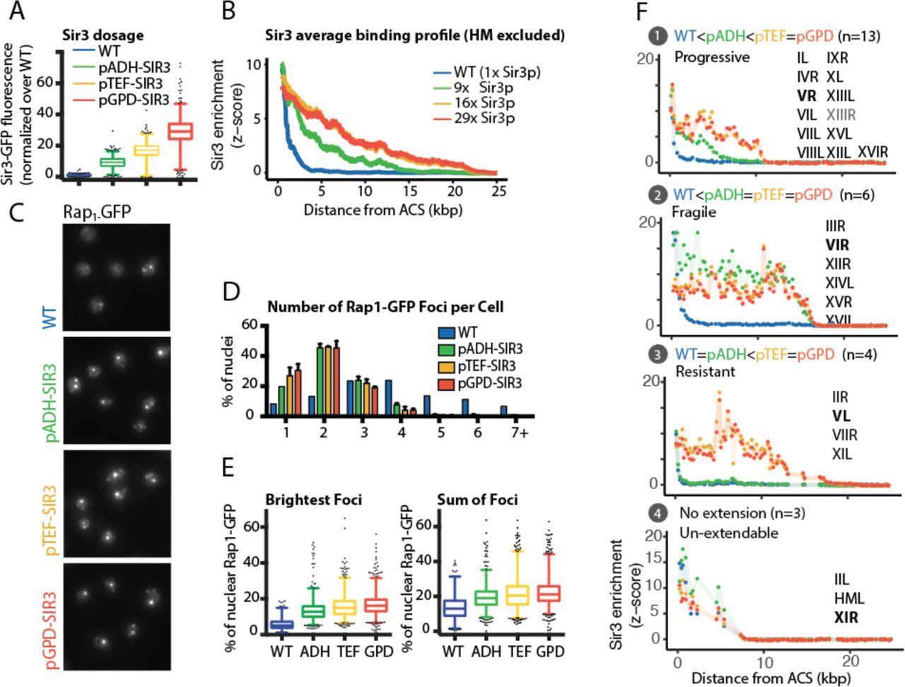 Expanding heterochromatin reveals discrete subtelomeric domains