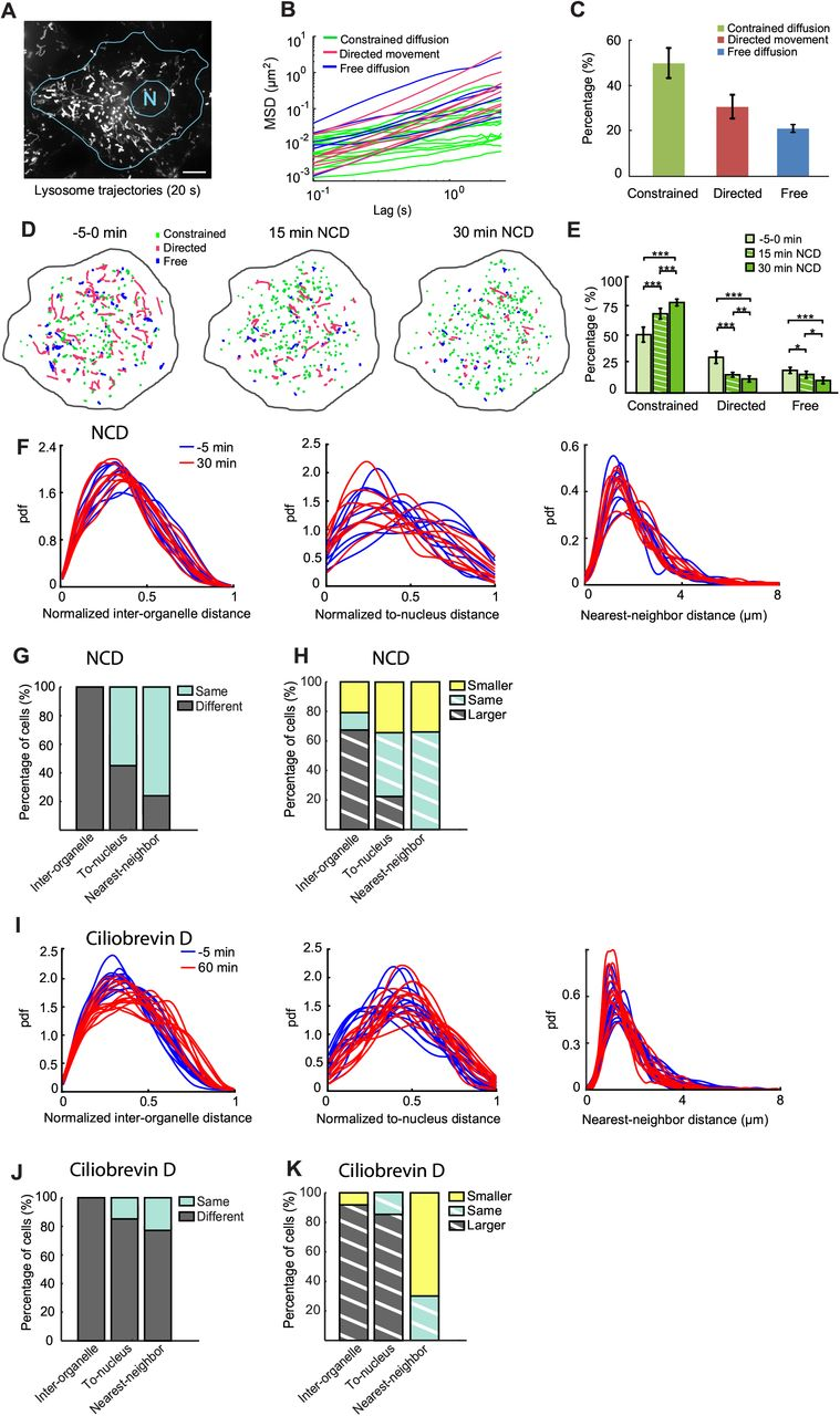 Whole-cell scale dynamic organization of lysosomes revealed