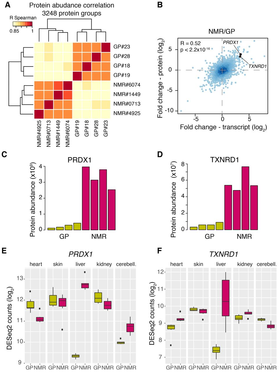 Species comparison of liver proteomes reveals enhanced lipid