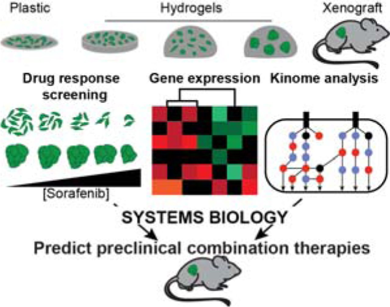 A Biomaterial Screening Approach Reveals Microenvironmental