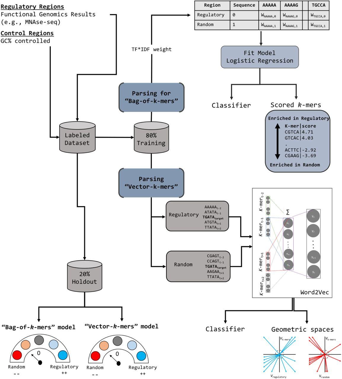 k-mer grammar uncovers maize regulatory architecture | bioRxiv