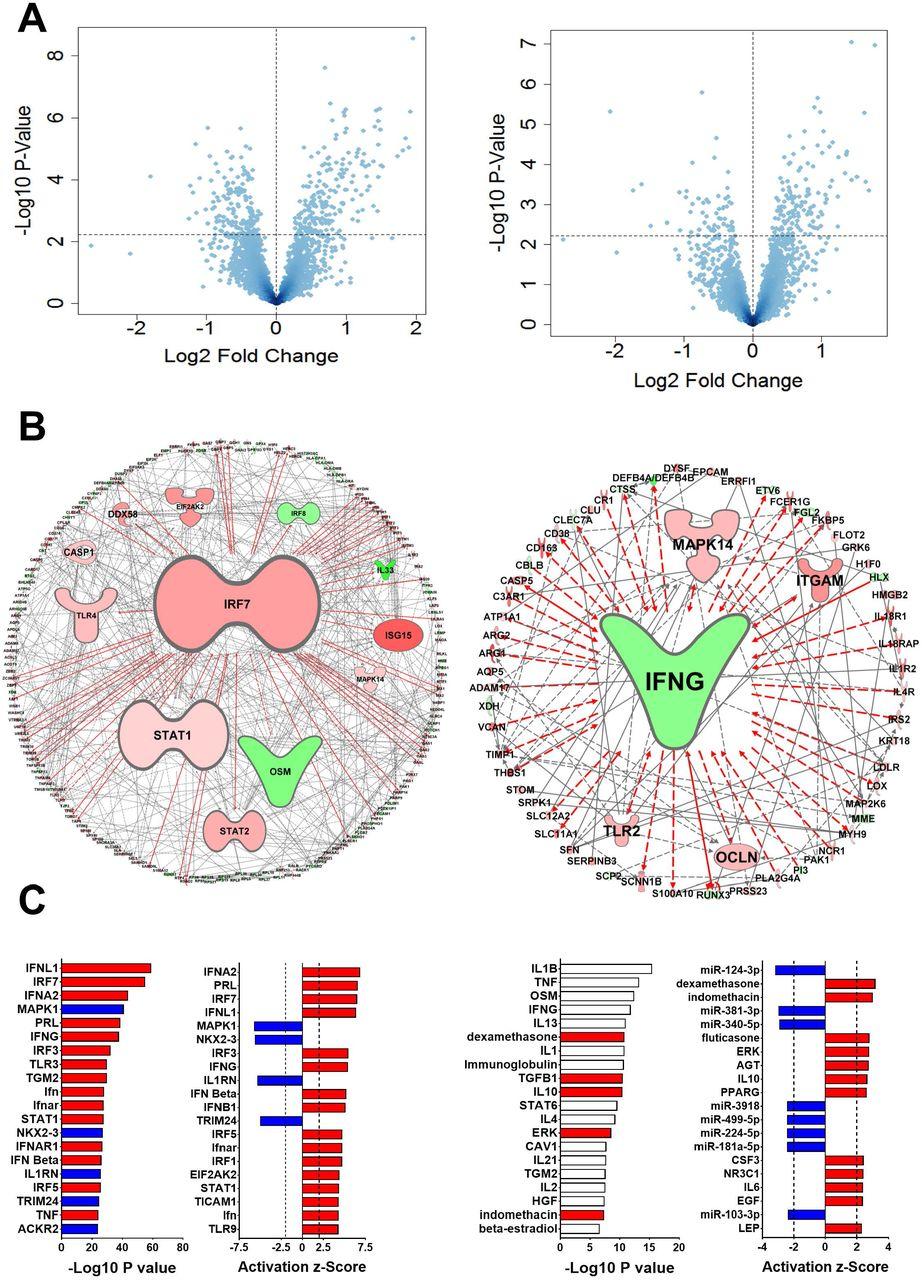 Molecular Network Identified Underlying >> Airway Irf7hi Versus Irf7lo Molecular Response Patterns Determine