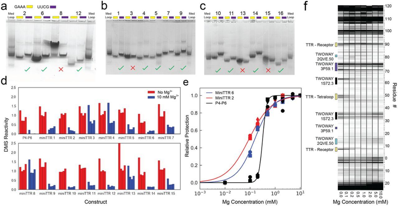 Computational Design of Asymmetric Three-dimensional RNA