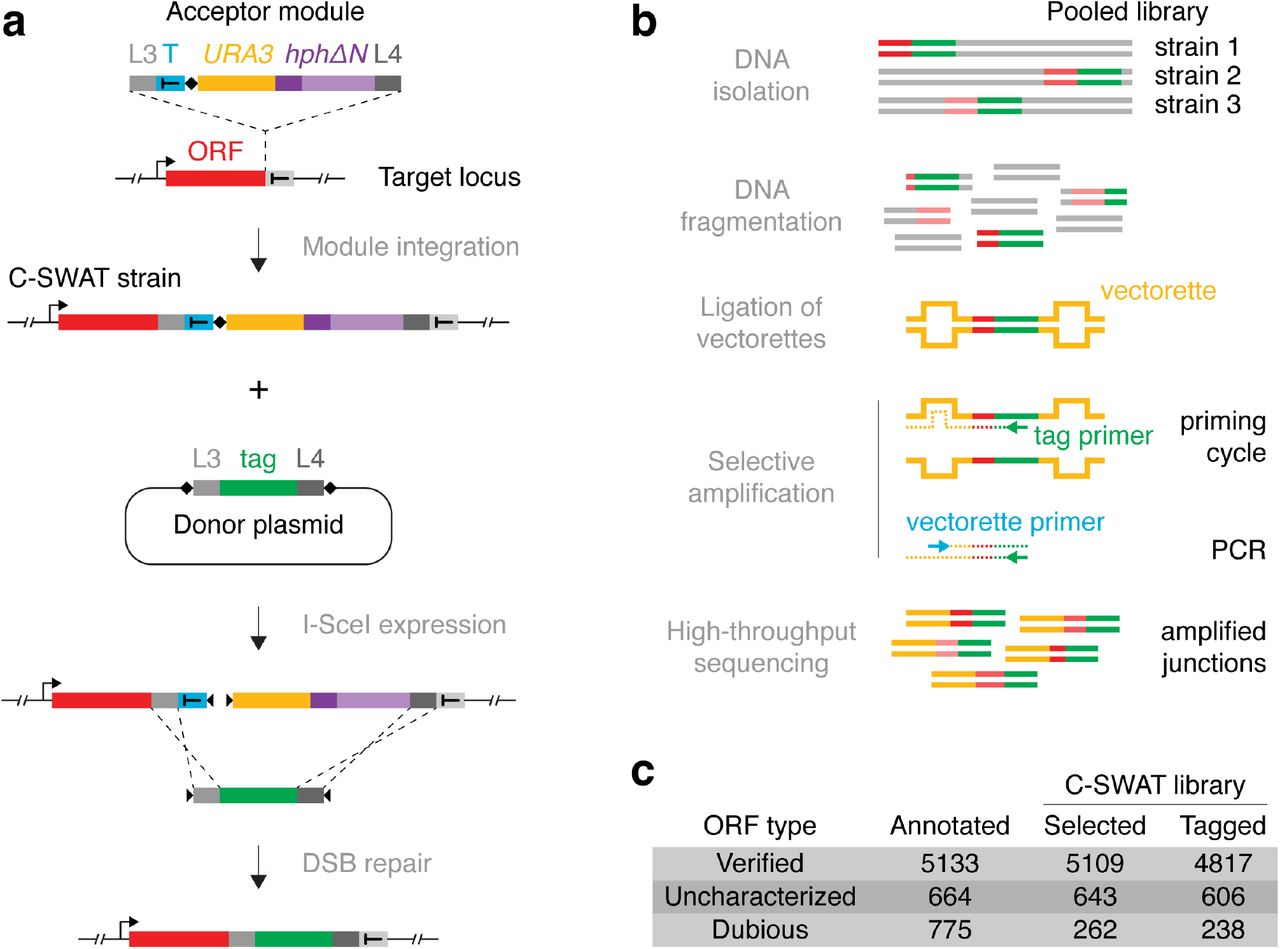 A genome-wide resource for high-throughput genomic tagging