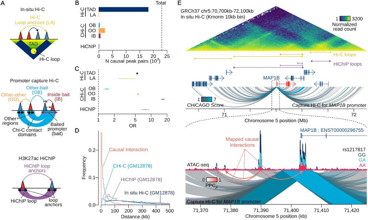 High resolution genetic mapping of causal regulatory