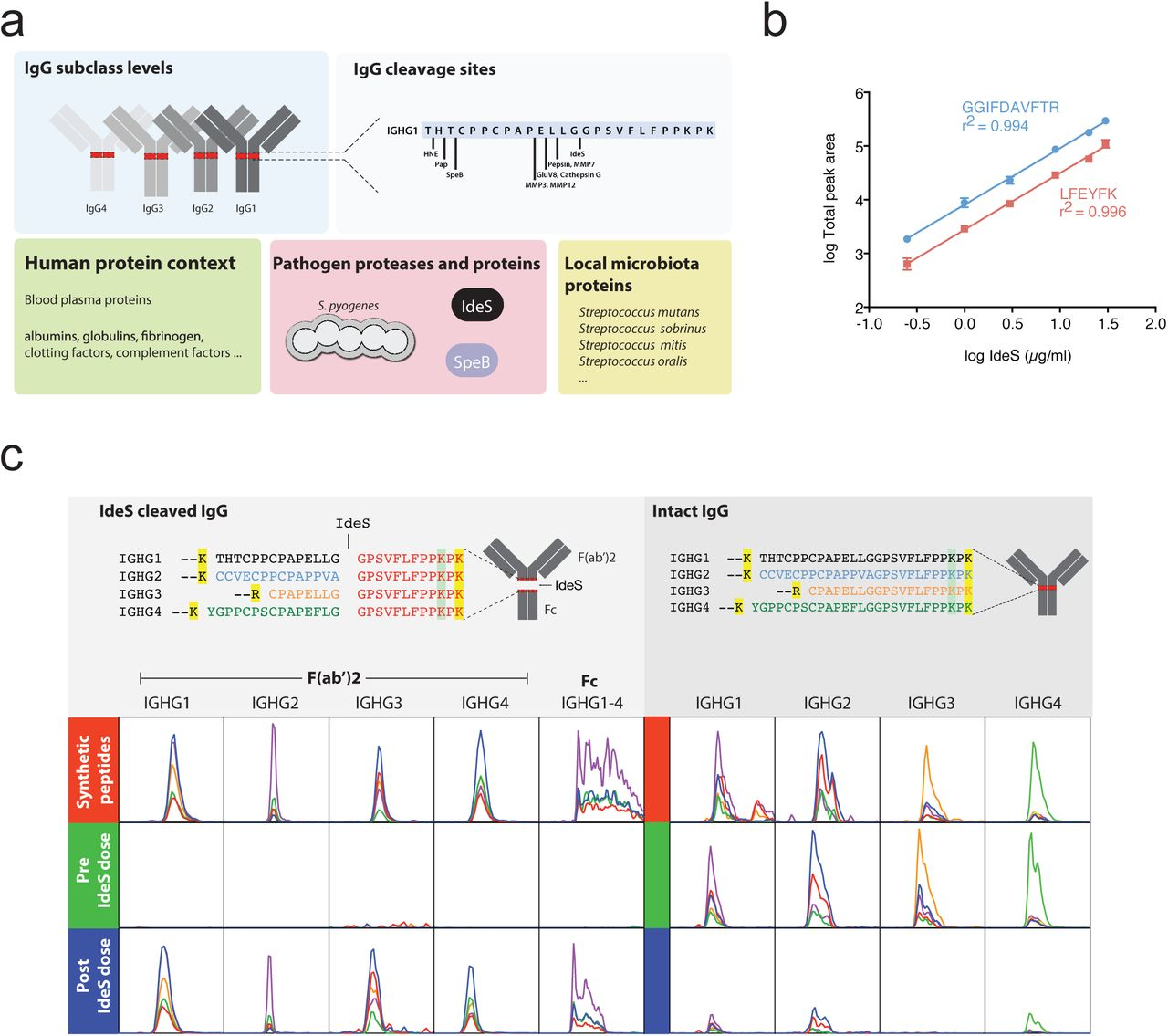 Streptococcus pyogenes infection and the human proteome with a
