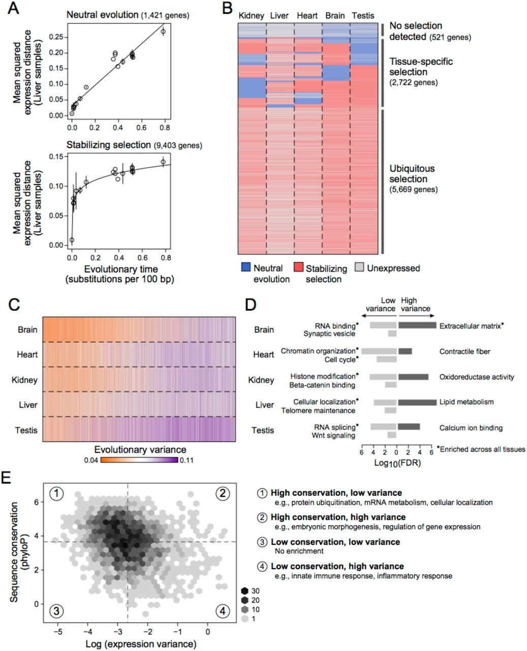 A quantitative model for characterizing the evolutionary history of