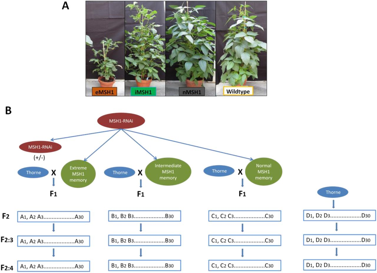 An epigenetic breeding system in soybean for increased yield