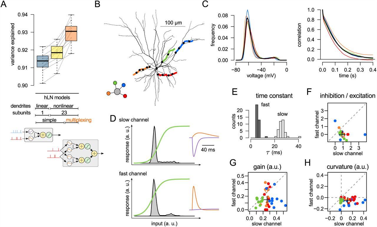 Global, multiplexed dendritic computations under in vivo