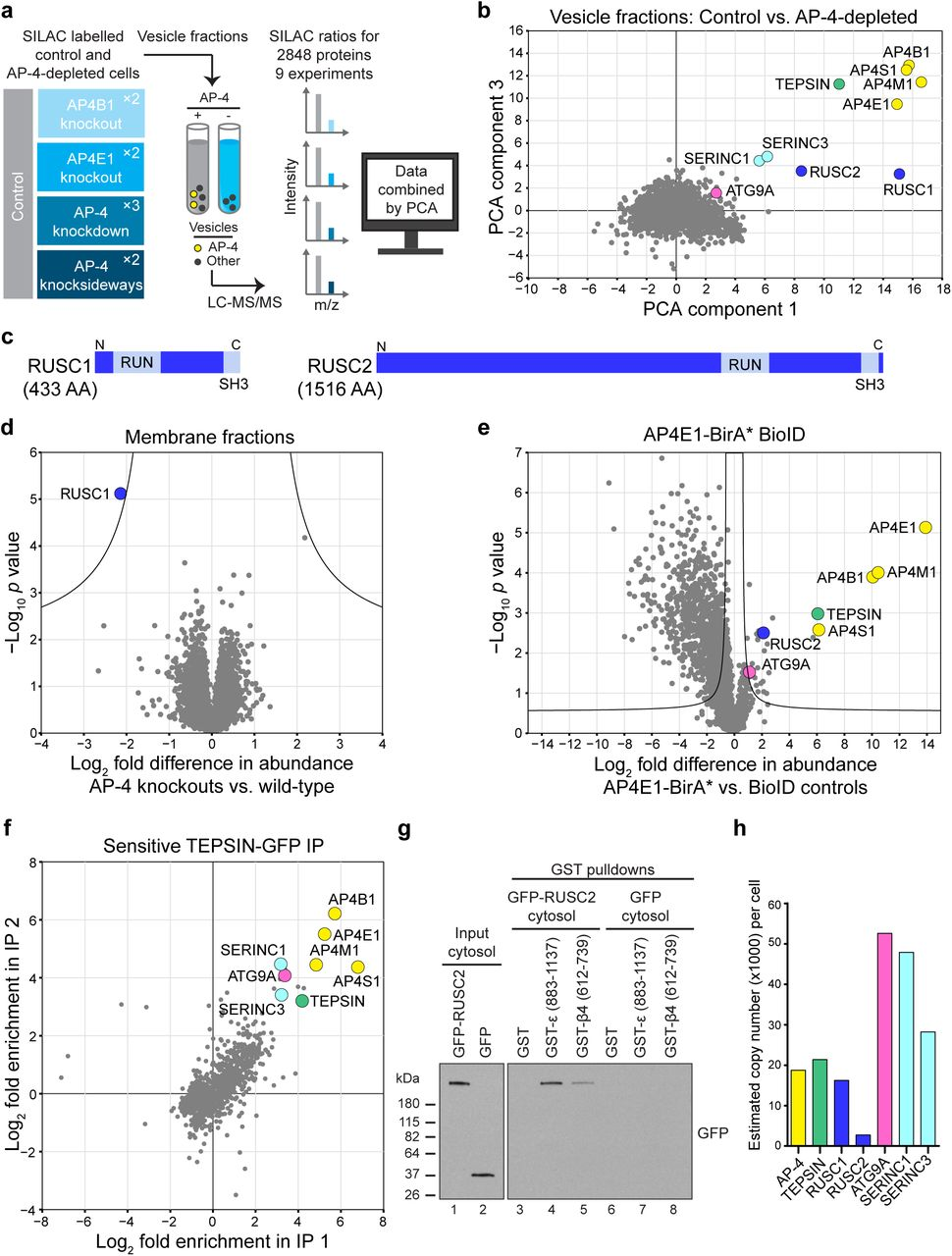 Nesca Presents Valued Approaches To >> Ap 4 Vesicles Unmasked By Organellar Proteomics To Reveal Their