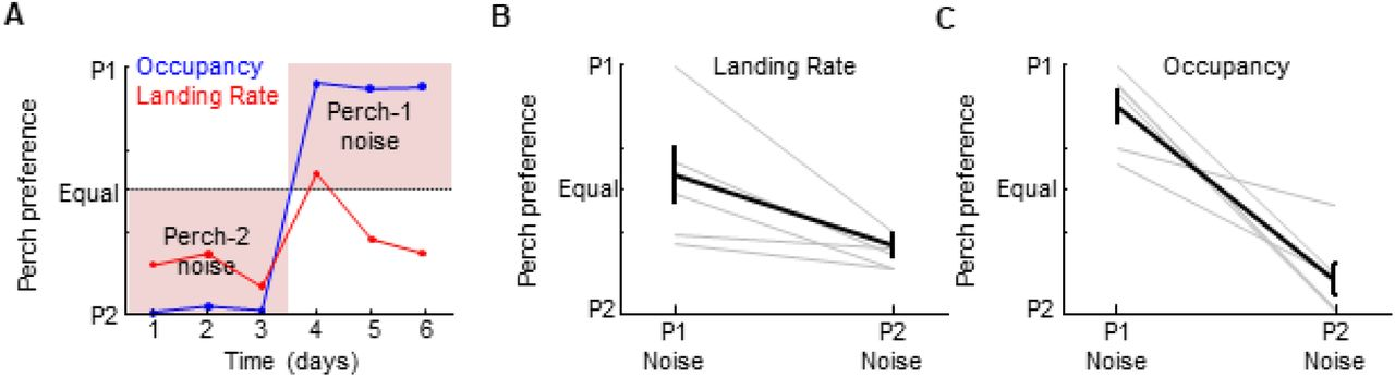 The segregation of vocal circuits solves a credit assignment