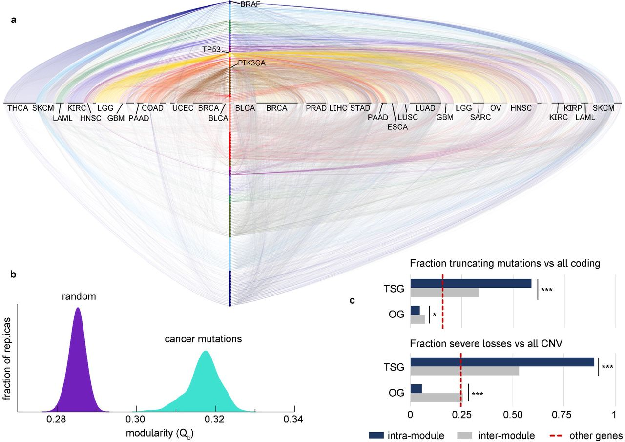 The cancer-mutation network and the number and specificity
