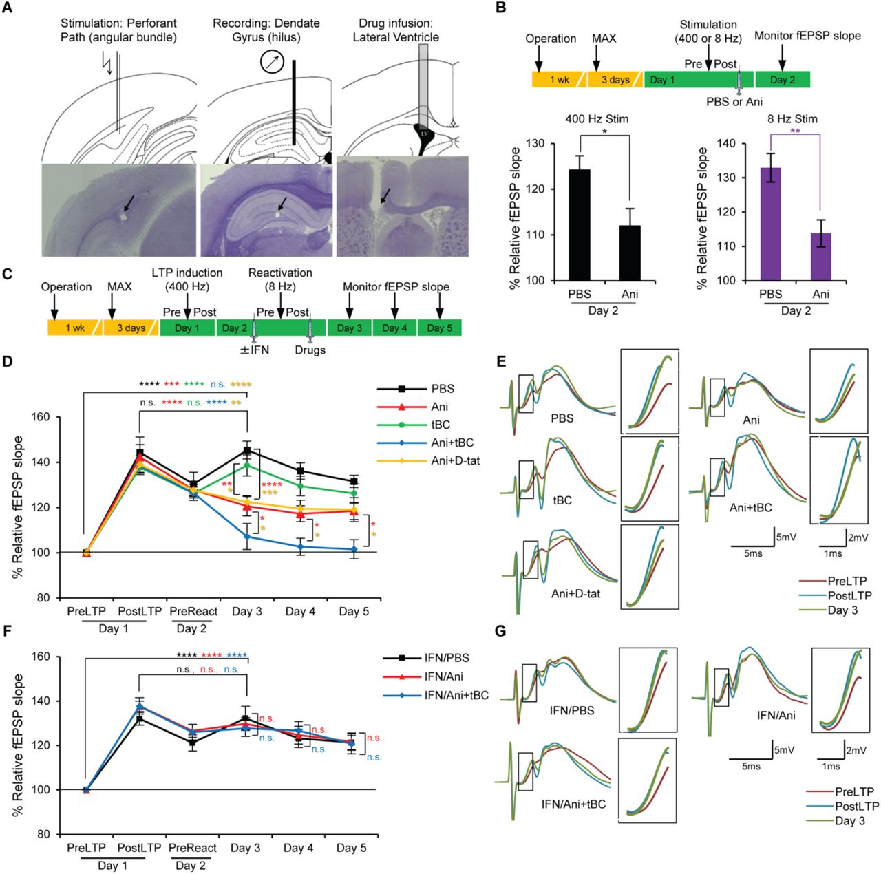 Autophagy enhances memory erasure through synaptic