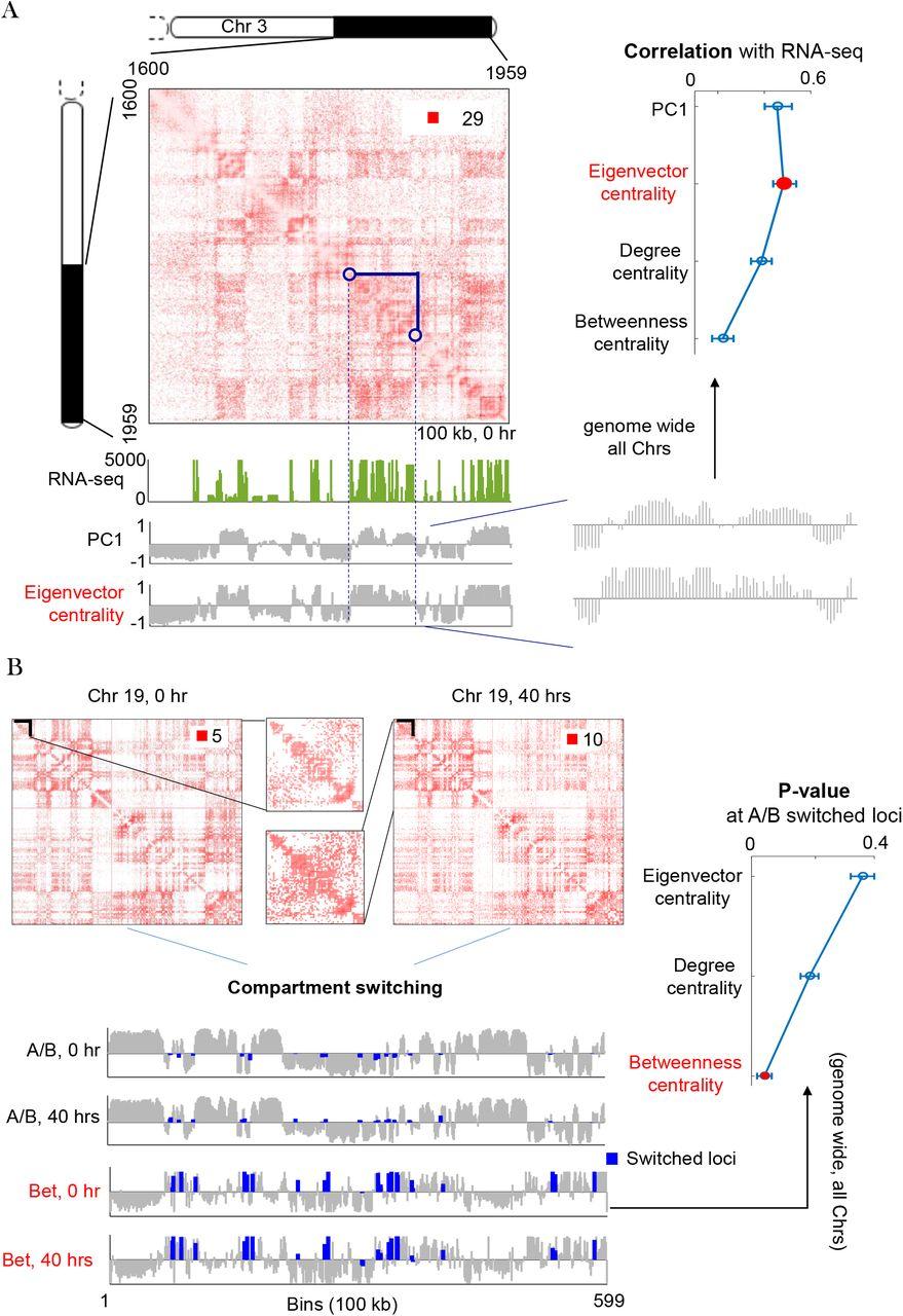 Genome Architecture Leads a Bifurcation in Cell Identity | bioRxiv