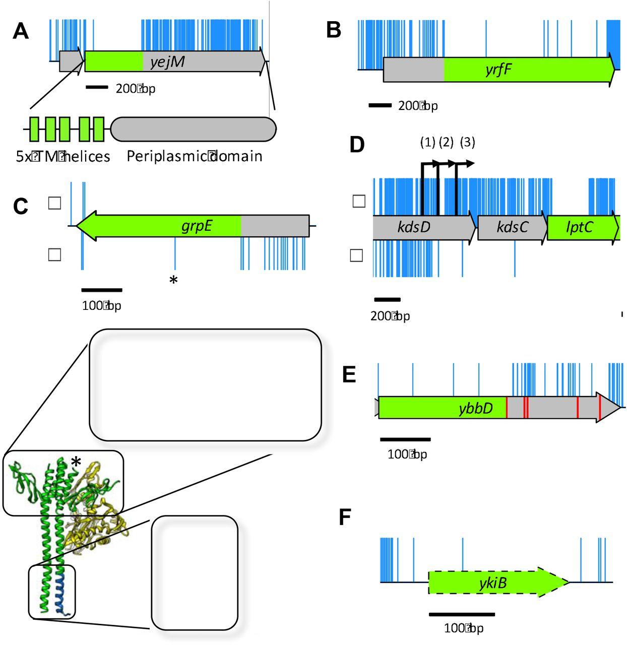 The essential genome of Escherichia coli K-12 | bioRxiv