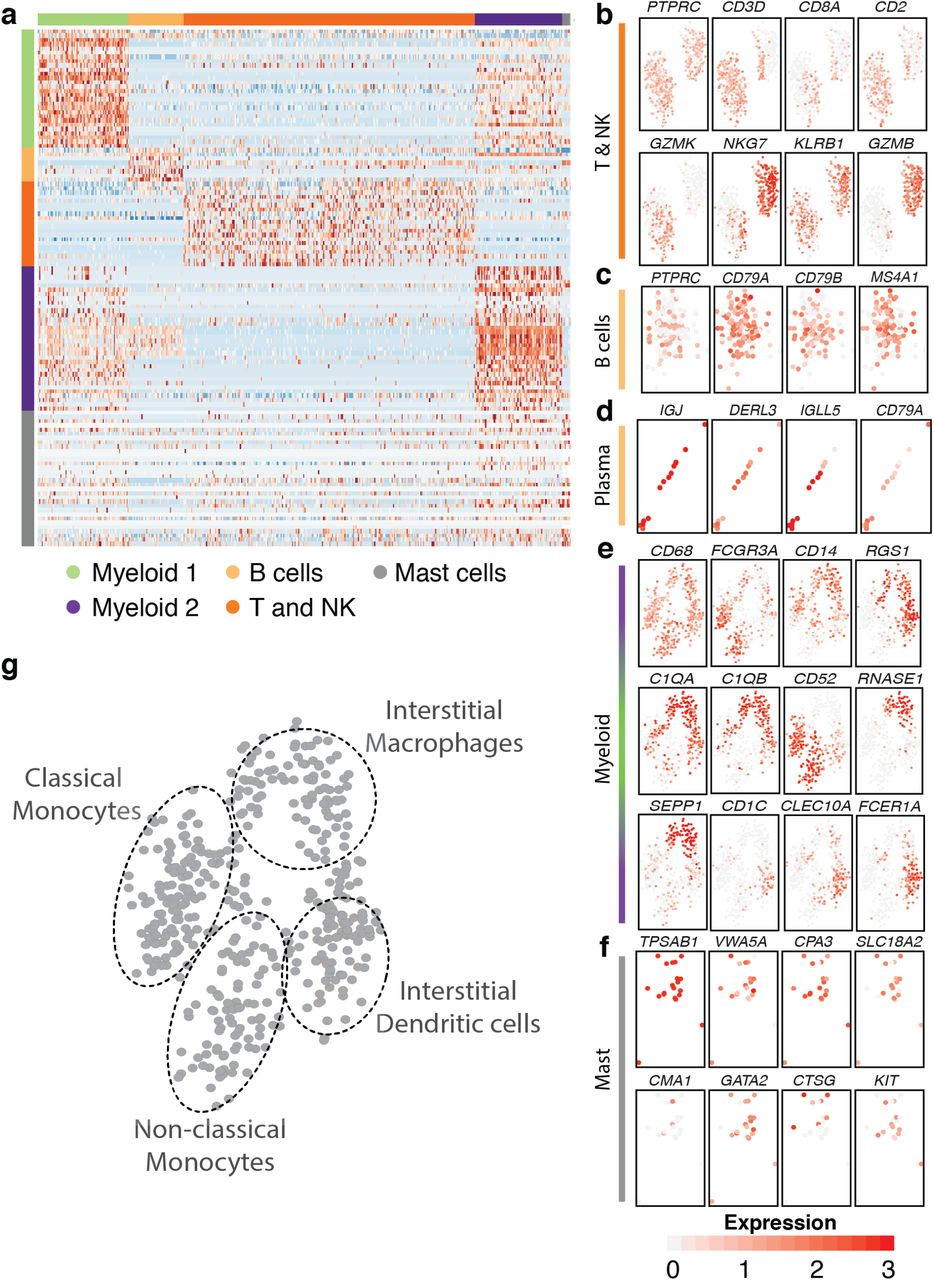 Comprehensive Cell Type Specific Transcriptomics of the