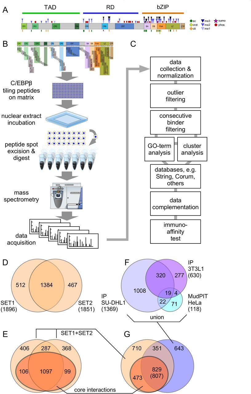 Protein Interaction Screen on Peptide Matrix (PRISMA) reveals