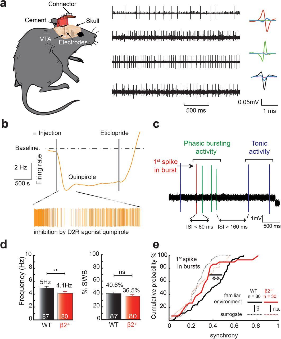 Acetylcholine-dependent phasic dopamine activity signals