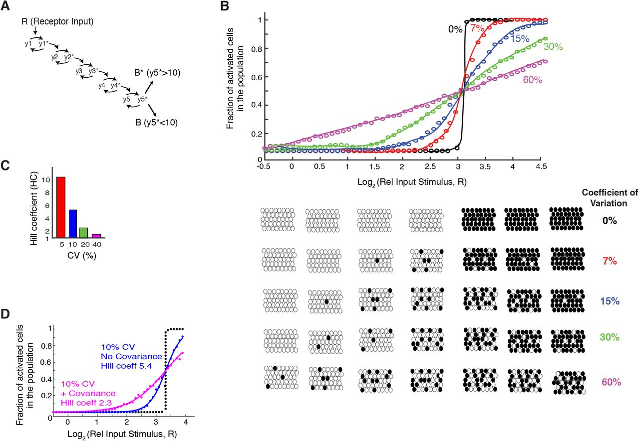 Expression variation and covariation impair analog and