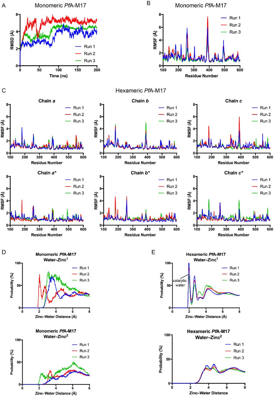 Role of dynamic cooperativity in the mechanism of hexameric M17
