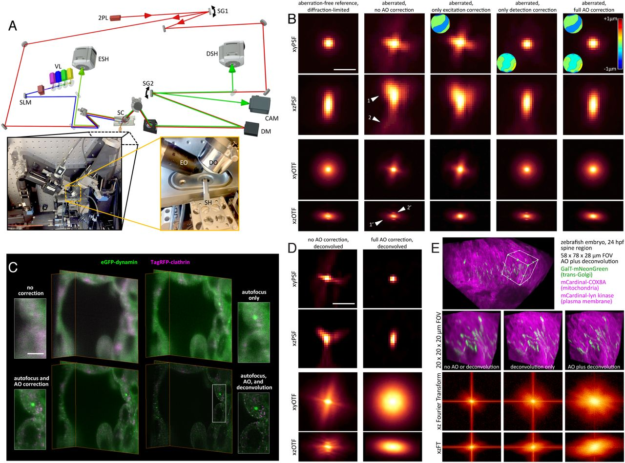 Observing the Cell in Its Native State: Imaging Subcellular