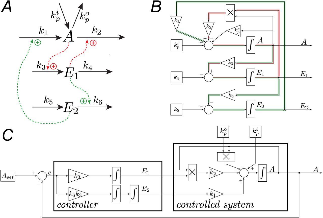 c1c920c6c Antagonistic regulation with a unique setpoint, integral and double ...