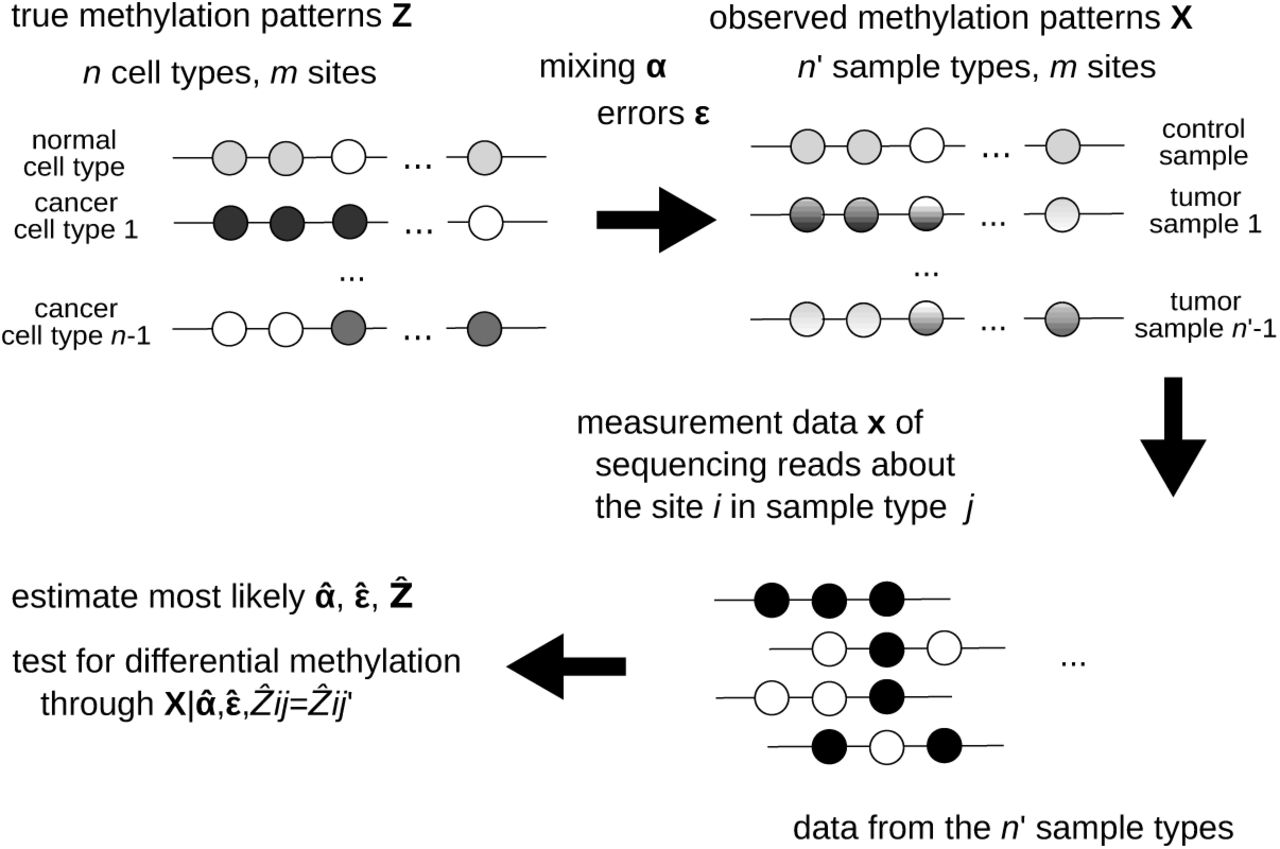 Identifying differentially methylated sites in samples with varying
