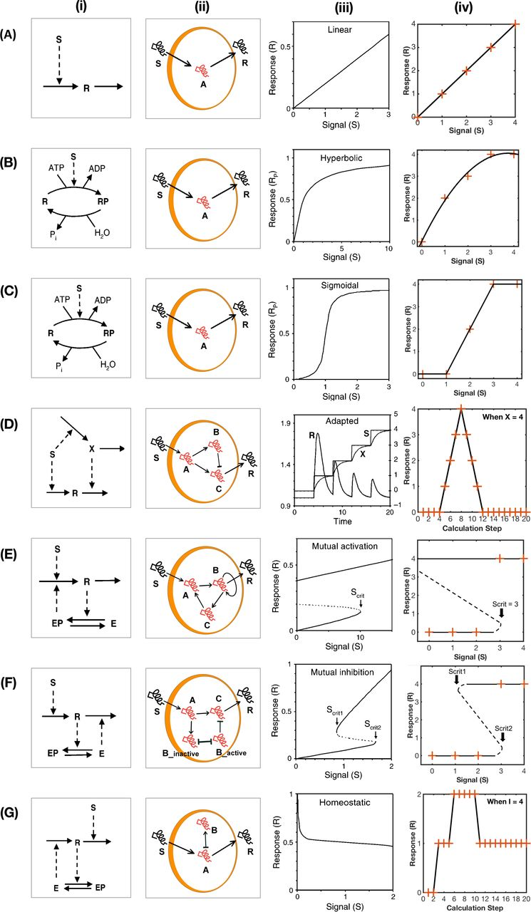 A Toolbox for Discrete Modelling of Cell Signalling Dynamics | bioRxiv