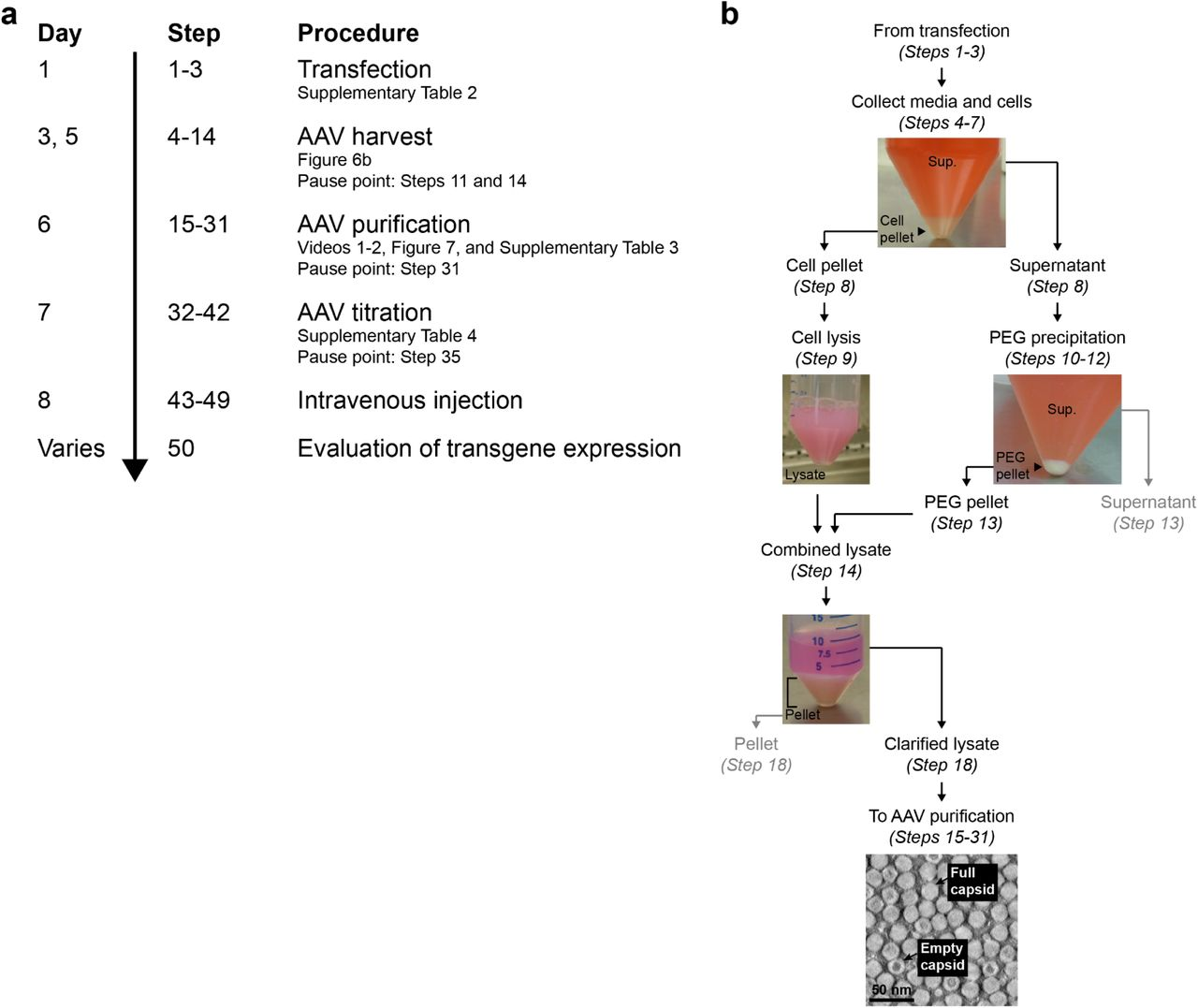 Widespread and targeted gene expression by systemic AAV vectors