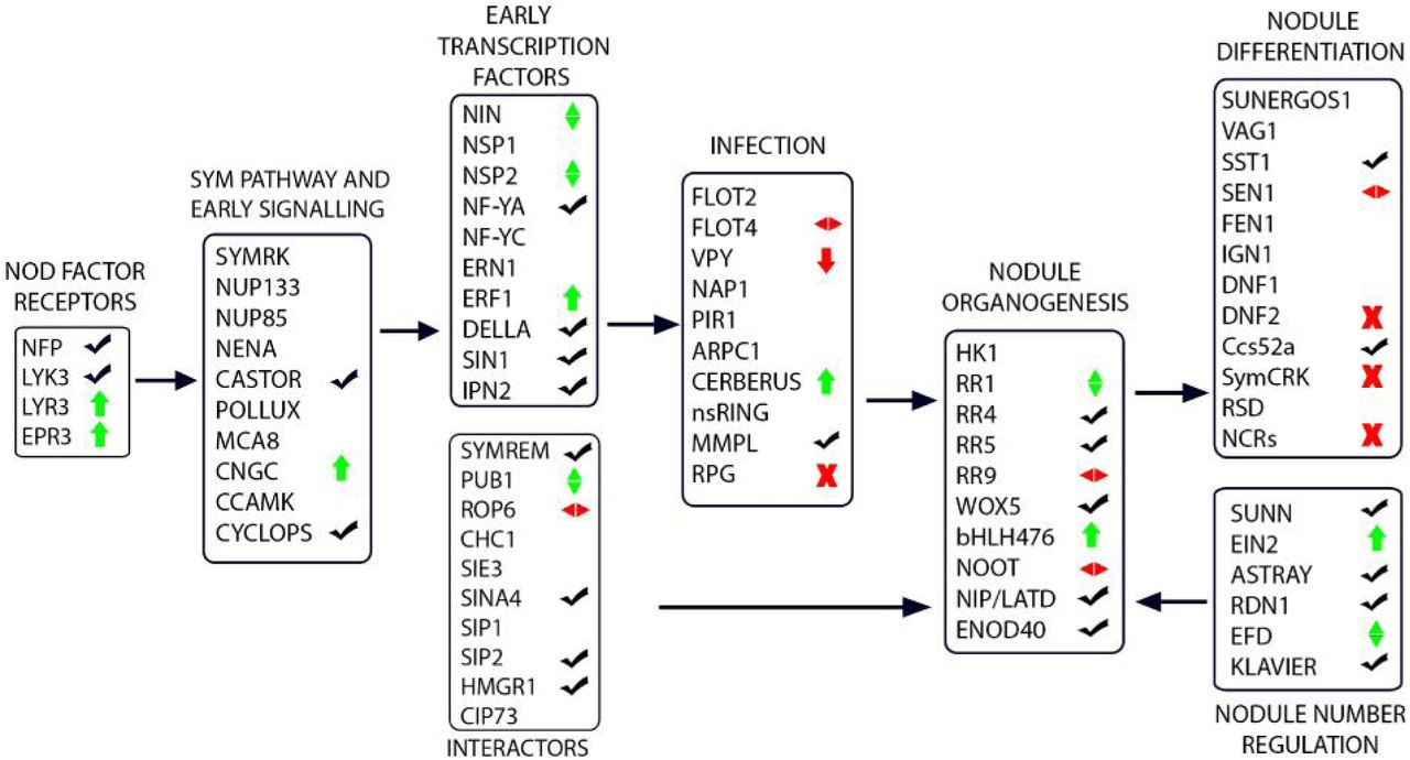 Transcriptomic analyses with the progress of symbiosis in 'crack