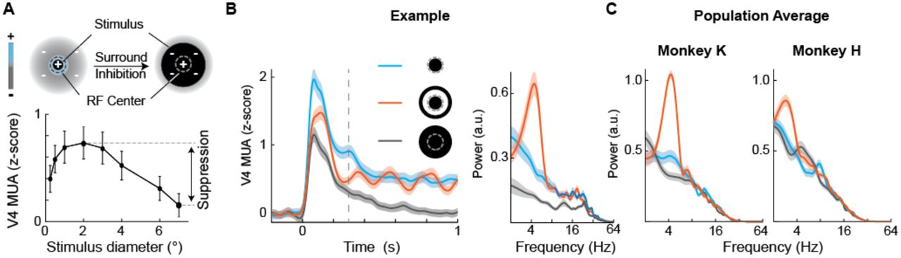 Rhythmic neural spiking and attentional sampling arising