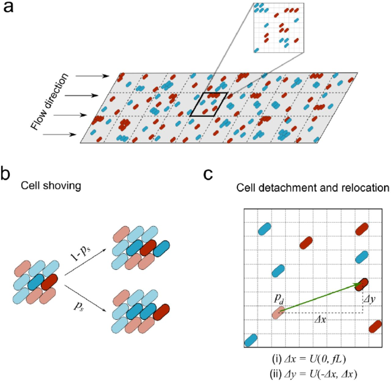 Cell adhesion and fluid flow jointly initiate genotype spatial