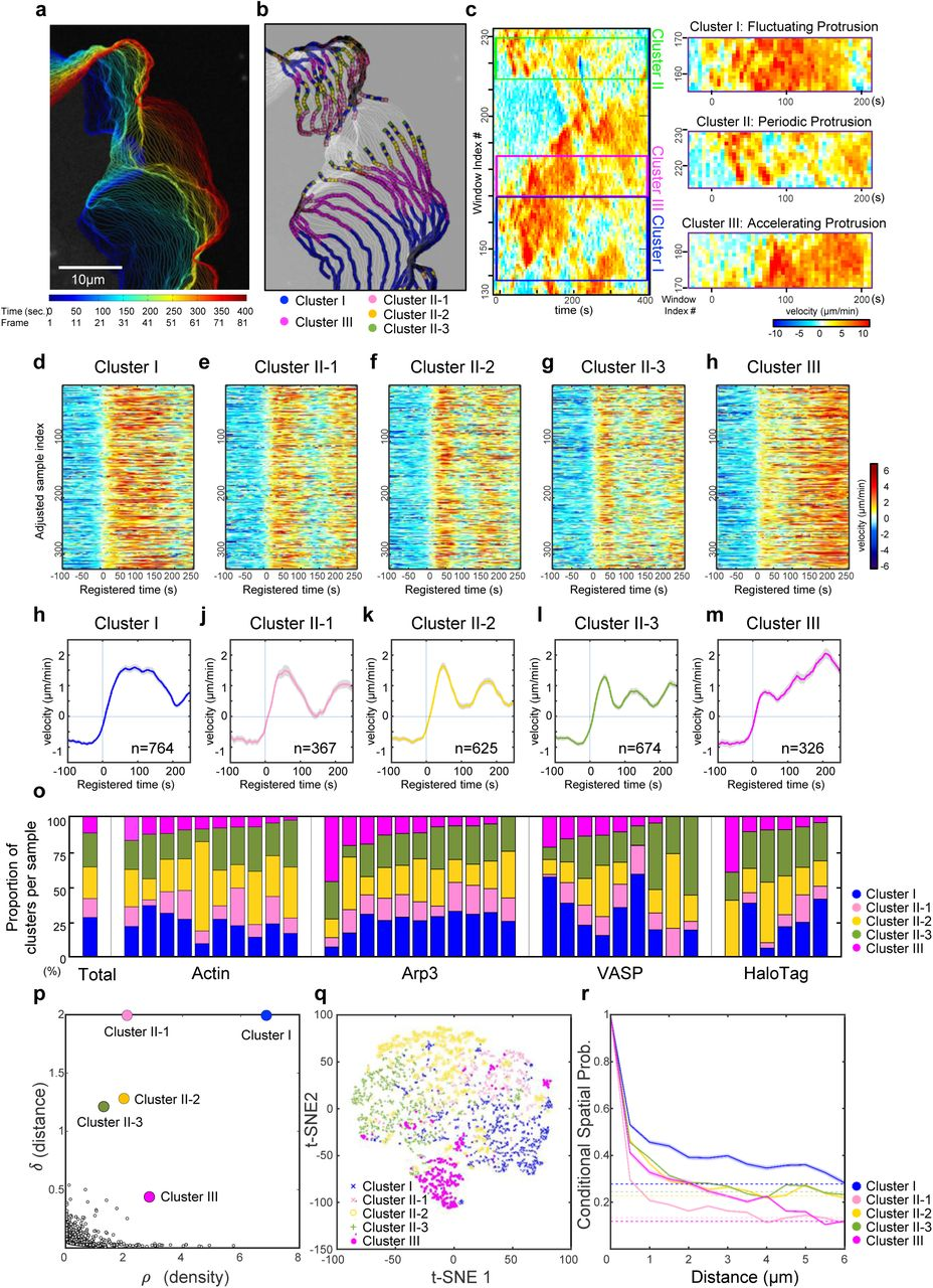 Deconvolution of subcellular protrusion heterogeneity and the