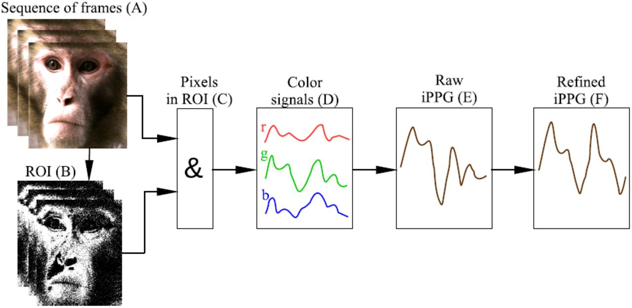 Using imaging photoplethysmography for heart rate estimation