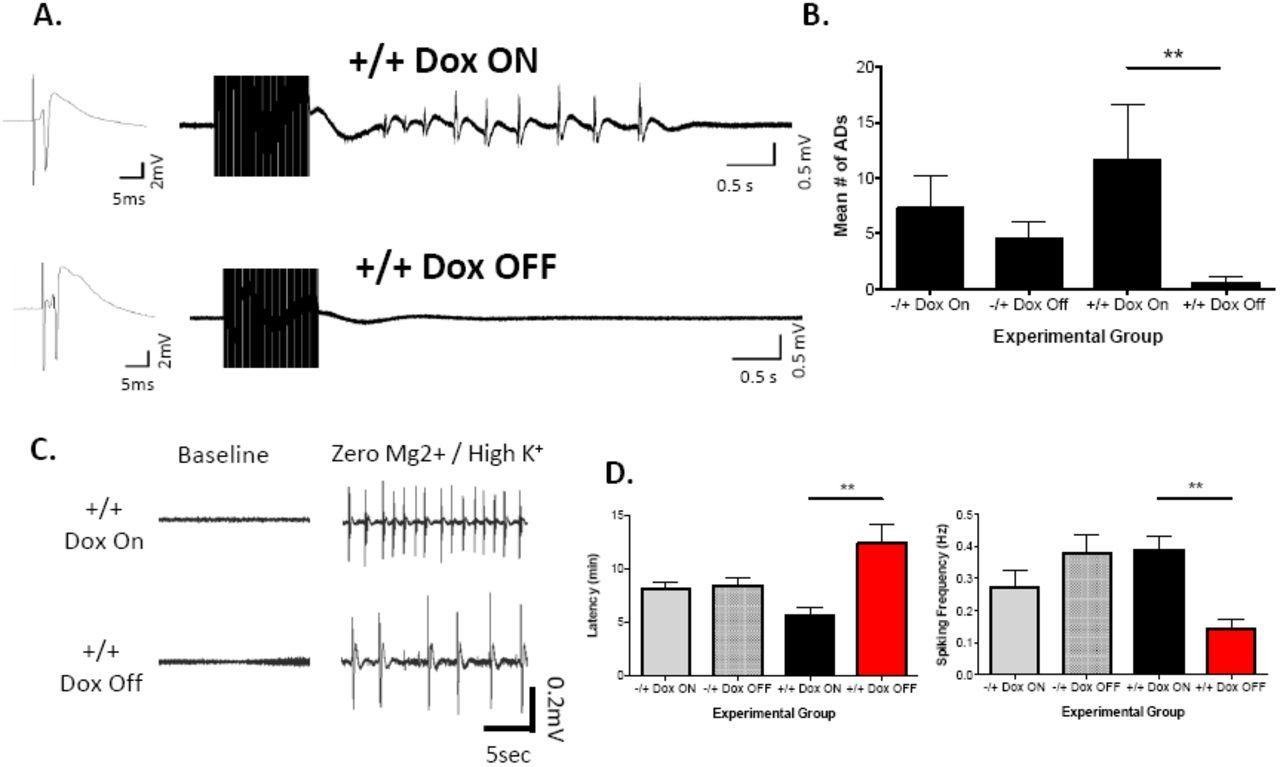 Conditional Upregulation of KCC2 selectively enhances neuronal