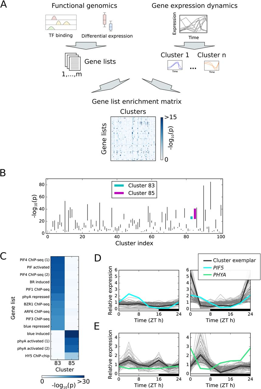 Dawn and photoperiod sensing by phytochrome A | bioRxiv