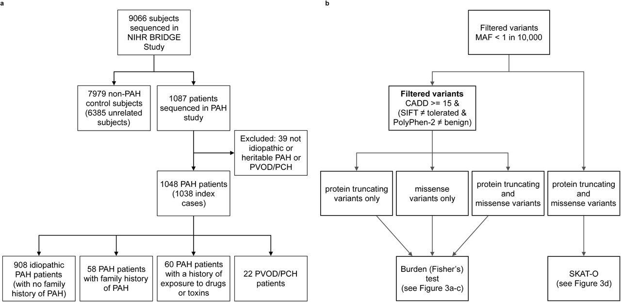 Identification of novel rare sequence variation underlying