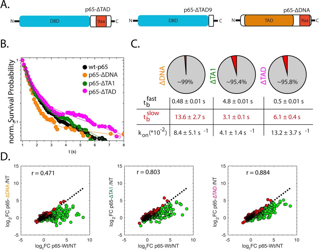Single-molecule dynamics and genome-wide transcriptomics