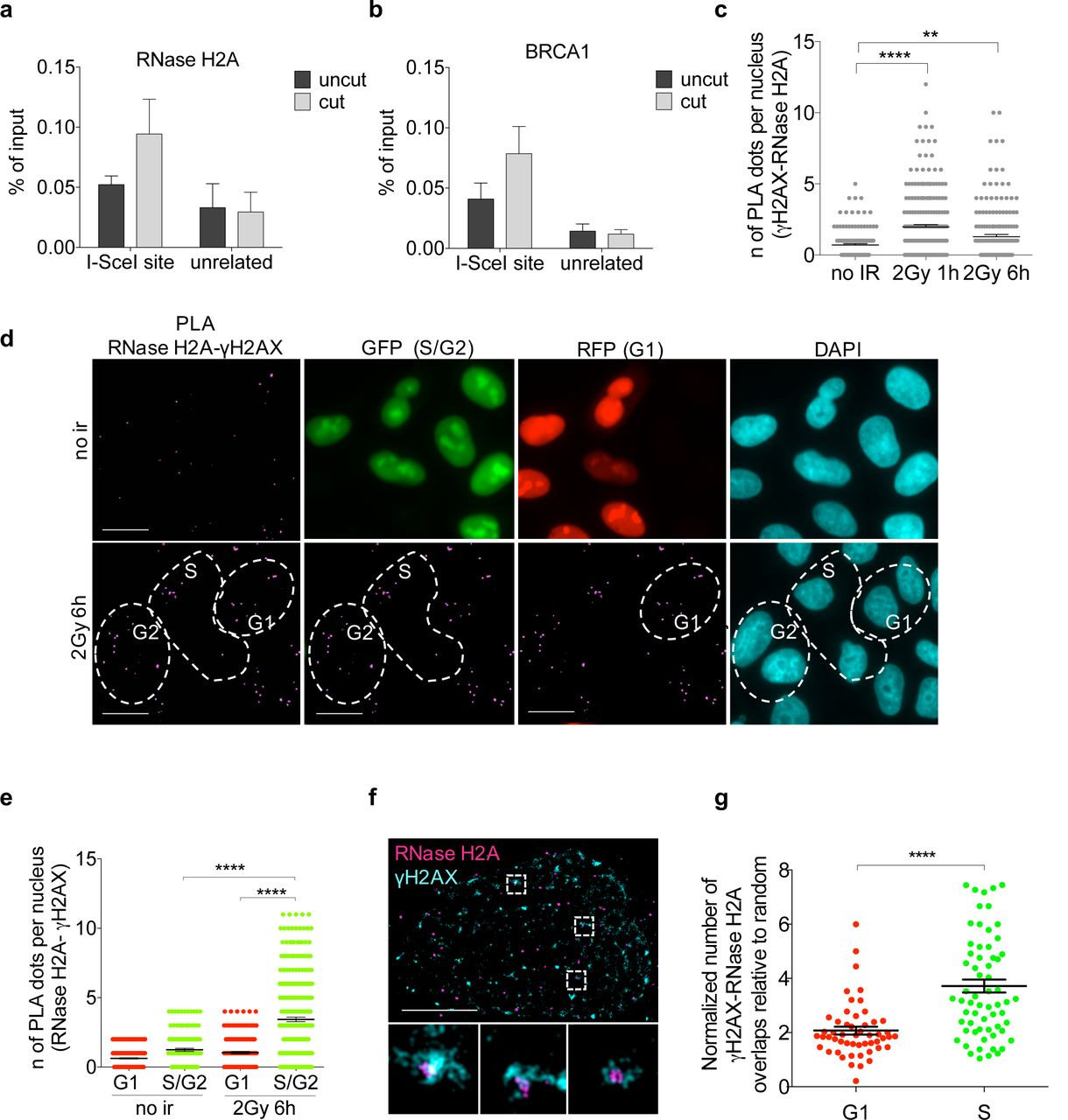 A role for RNA and DNA:RNA hybrids in the modulation of DNA repair
