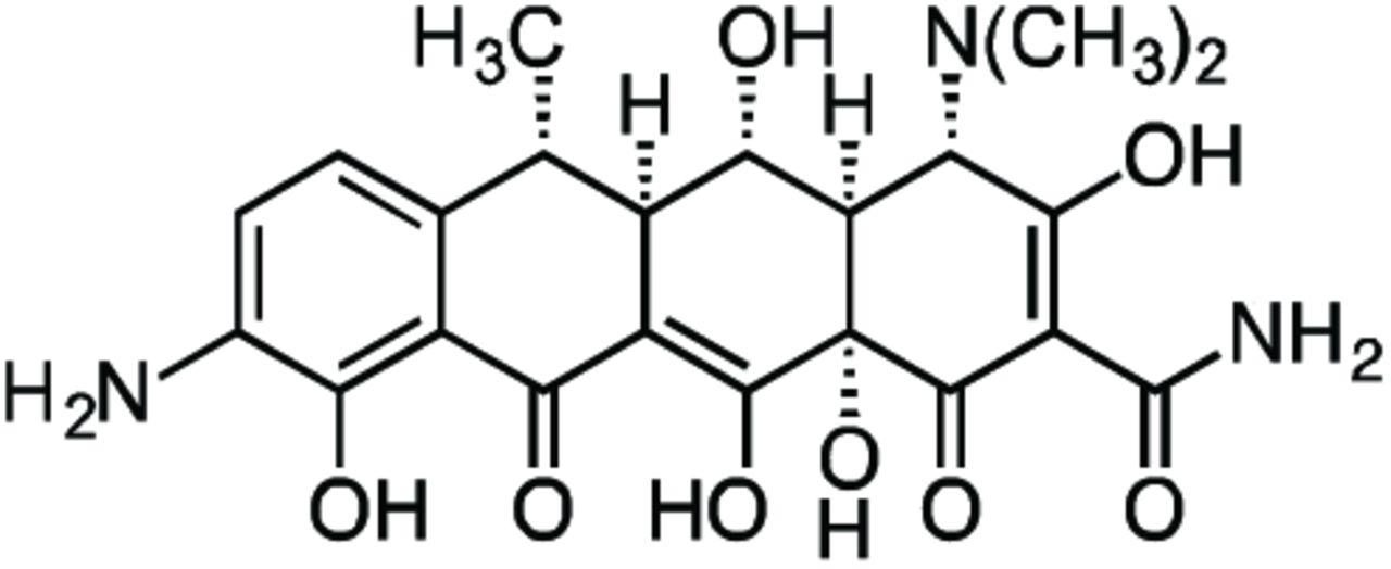 Tetracyclines Modify Translation By Targeting Key Human rRNA
