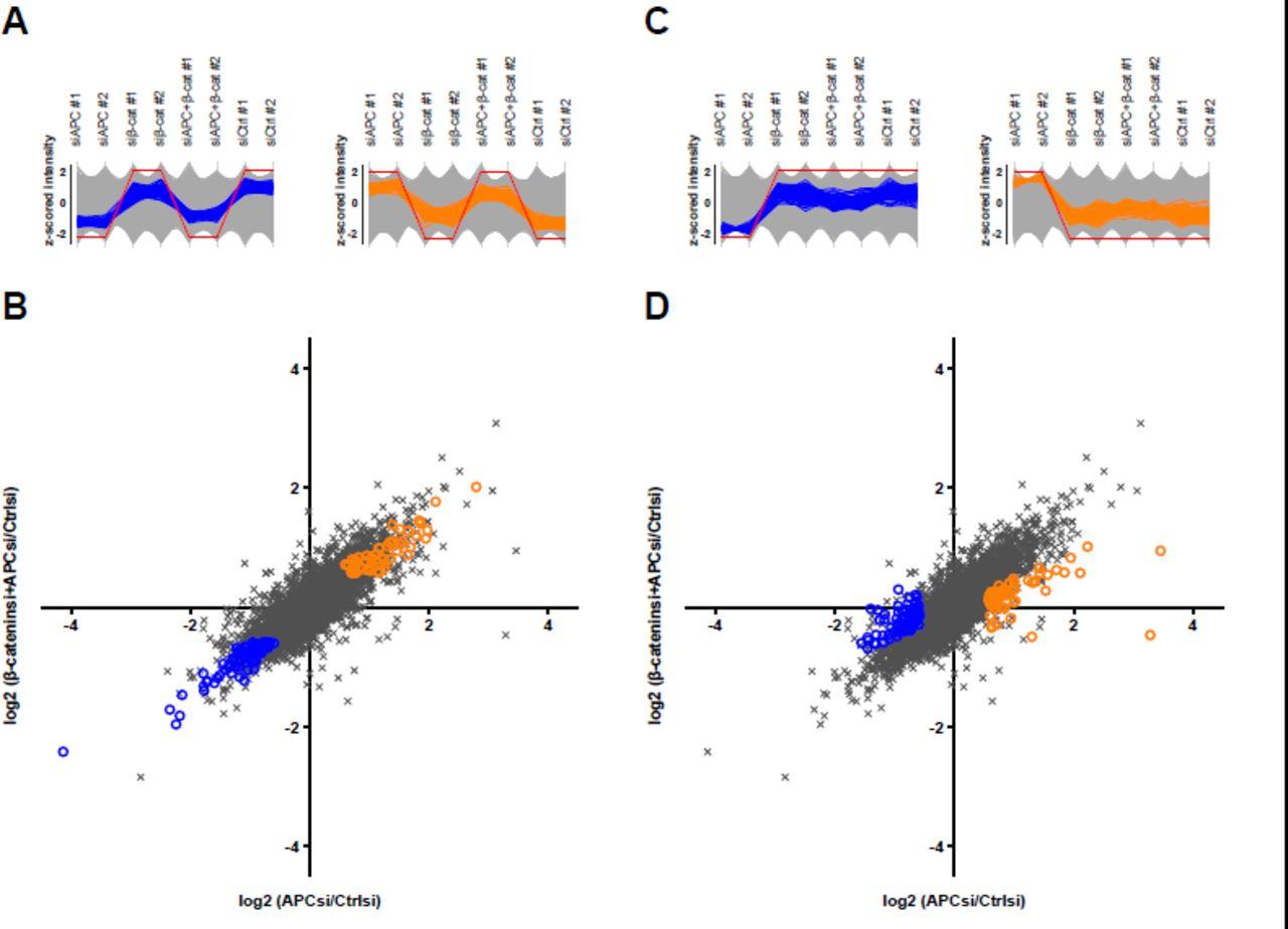 Identification of endogenous Adenomatous polyposis coli