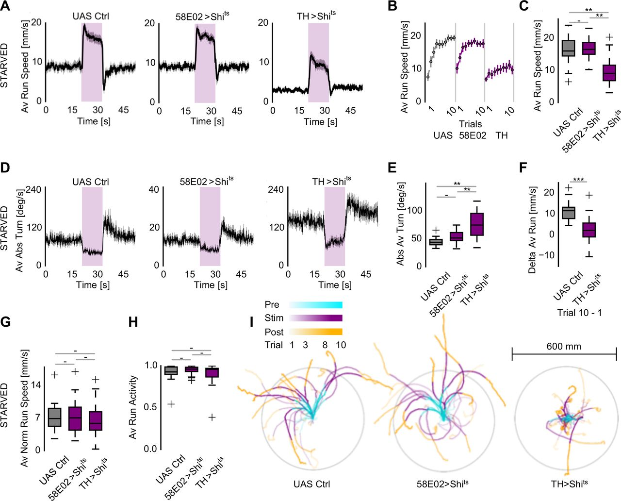 Specific octopaminergic neurons arbitrate between
