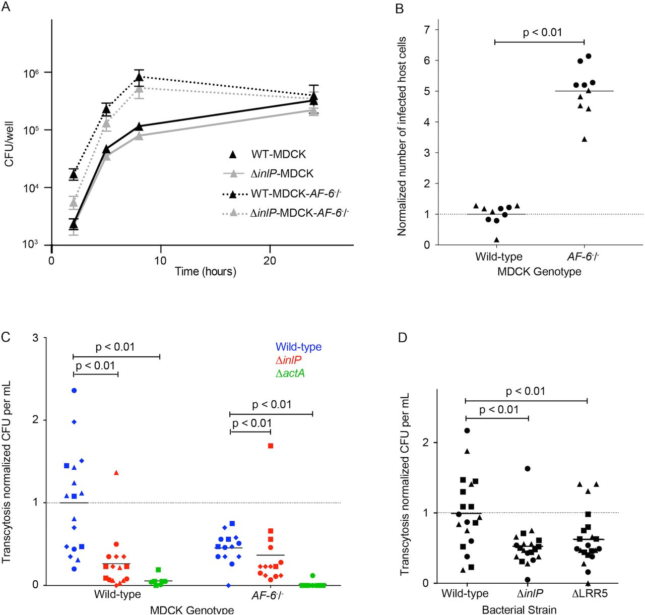 Listeria monocytogenes InlP interacts with afadin and