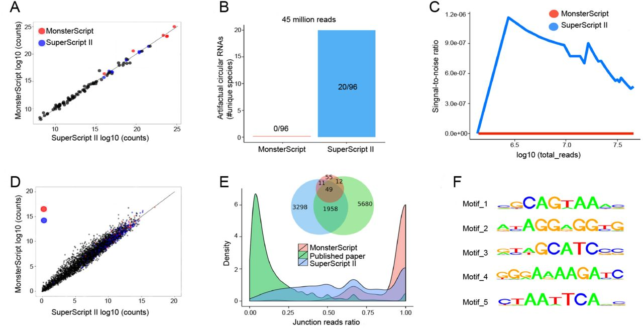 Deep sequencing analyses of control linear RNAs and RNAs from young (4-month-old) and old (2-year-old) brain samples ( A ) Similar performance of RNA-Seq analyses on a library of 96 linear RNAs (ERCC RNA Spike-In Mix) using SuperScript II and MonsterScript. Data represent mean values of duplicated experiments. ( B ) Twenty artificial circular RNAs were identified from SuperScript II, but none from MonsterScript libraries of the ERCC RNA Spike-In Mix based on junction sequences. ( C ) Relationship between sequencing depth and noise-to-signal ratios of SuperScript II vs. MonsterScript-based library construction protocols for circular RNA identification. Sequencing data of the ERCC RNA Spike-In Mix were used for this analysis. ( D ) The scatter plot showing sequencing count distribution of all the genes detected in the duplicated libraries constructed using the two reverse transcriptases (MonsterScript and SuperScript II) using RNAs from brains samples of young (4-month-old) and old (2-year-old) mice. ( E ) Venn diagram showing the putative circular RNAs identified from mouse brain by a previous ( 8 ) and the present studies using SuperScript II- and MonsterScript-based library construction protocols. Junction reads ratios in mouse brain libraries from a previous and the present studies using SuperScript II and MonsterScript-based library construction protocols. ( F ) Potential motifs found in the junction sequences of artificial circular RNAs.