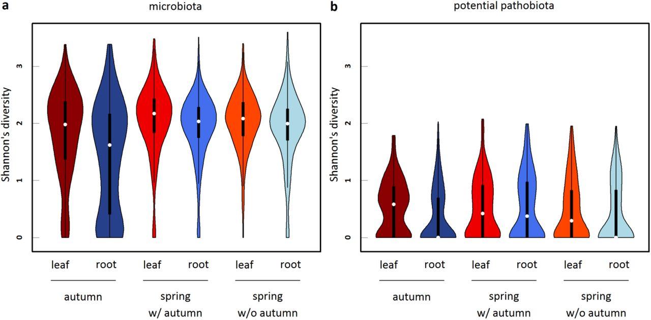 In situ relationships between microbiota and potential