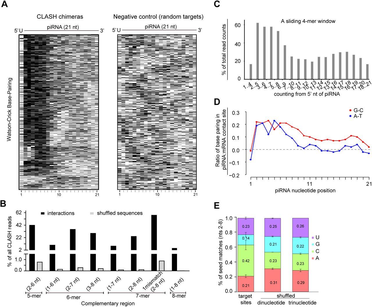 Identification of piRNA binding sites reveals the Argonaute