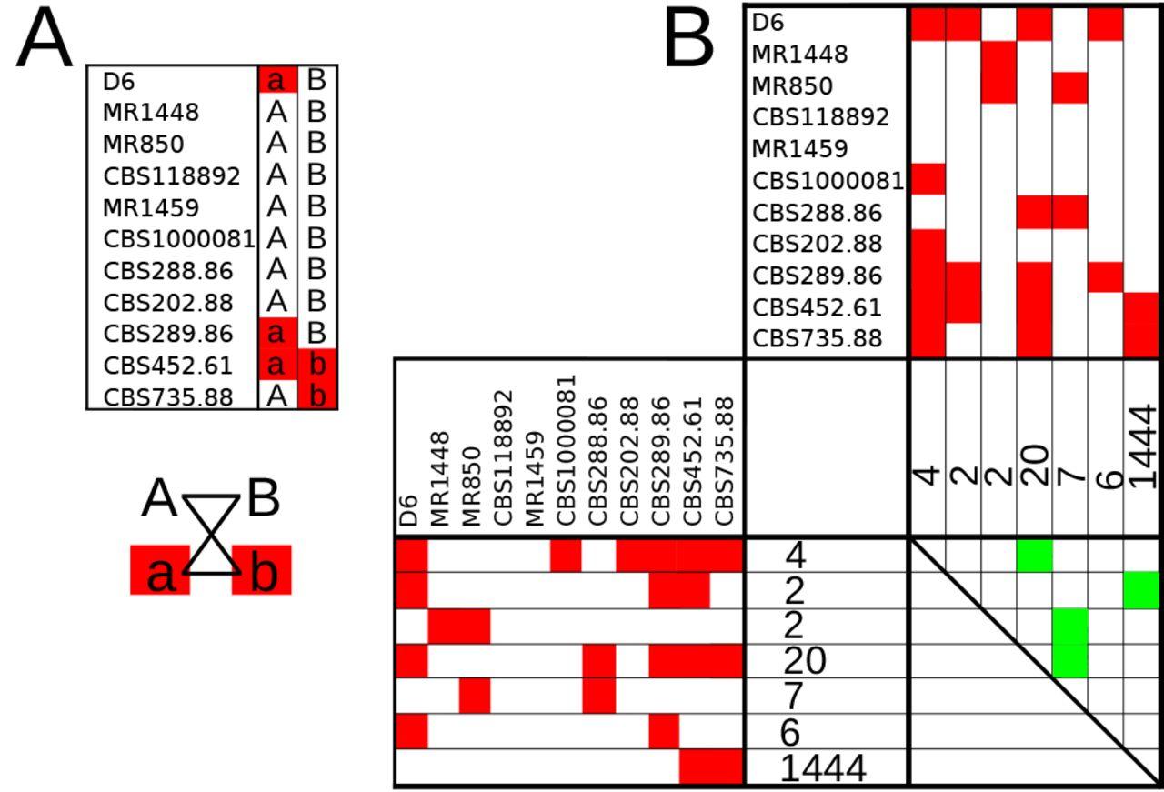 Whole genome analysis illustrates global clonal population