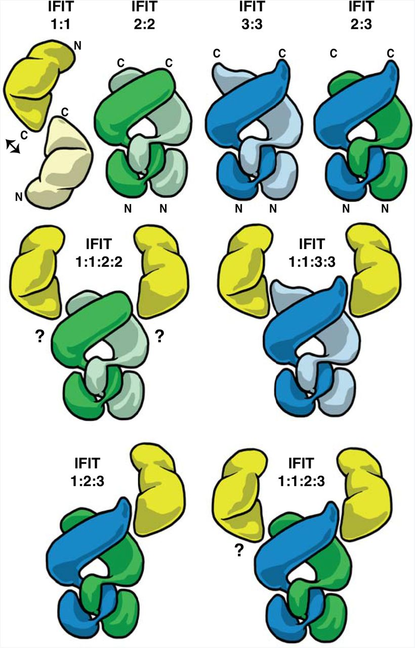 IFIT3 and IFIT2/3 promote IFIT1-mediated translation inhibition by