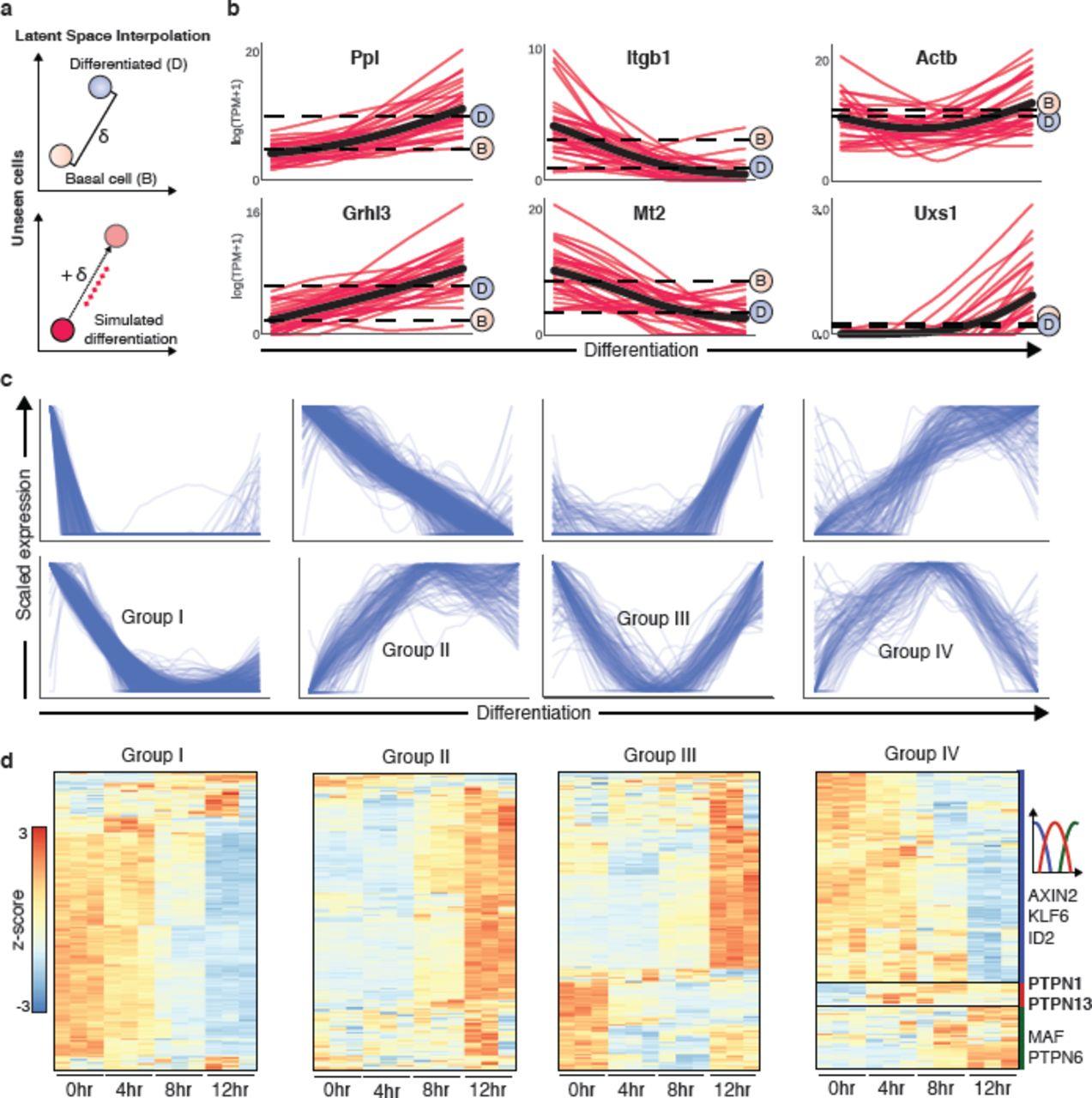 Generative adversarial networks uncover epidermal regulators