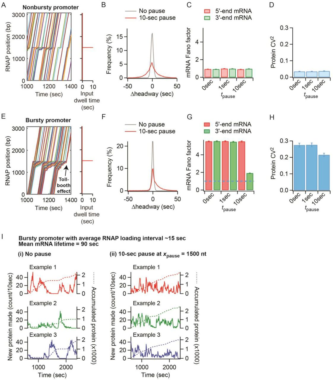 Effects of mRNA degradation and site-specific